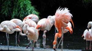 20190725-flamingo.jpg